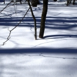 The still life of winter.<br /><em>Submitted by Greg Petzold</em>