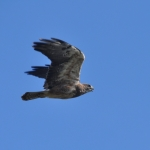 In flight.<br /><em>Submitted by Doug Kretchmer</em>