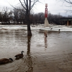 Geese enjoy high spring water at The Forks<br /><em>Submitted by Greg Petzold</em>