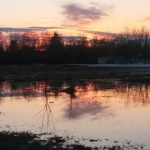 Spring reflection<br /><em>Submitted by Cheryl Cohan</em>