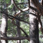 Seeing the forest through the trees.<br /><em>Submitted by Marie LeBlanc</em>