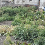 Gardening on Logan.<br /><em>Submitted by C. Boles</em>