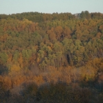 Fall colours.<br /><em>Submitted by Terri Chick-Gall</em>