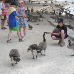 Feeding the geese at The Forks.Submitted by Peter Parboji