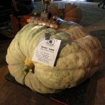 1242.5 lbs. at Roland Pumpkin Fair.<br /><em>Submitted by LuAnn Lovlin</em>